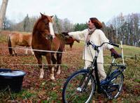 Rad und Pferd